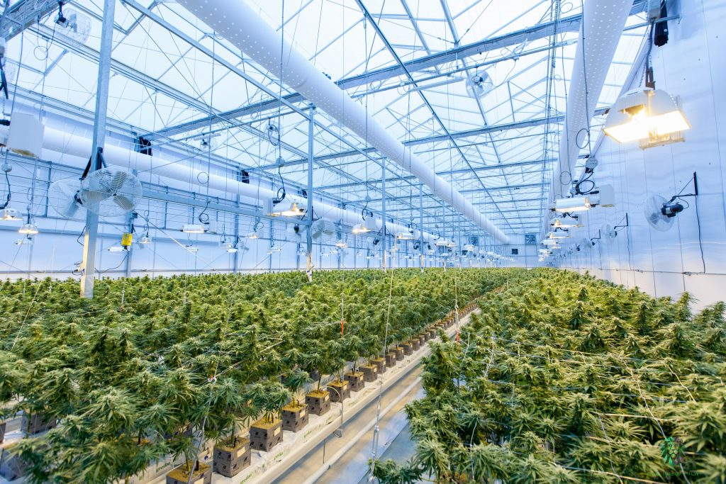 What to ask a CBD Supplier